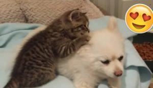 gatito-rescatado-se-hace-amigo-de-perro2