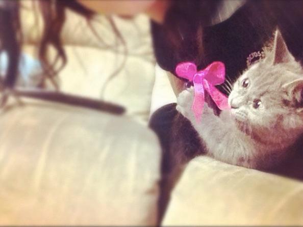 gatito2