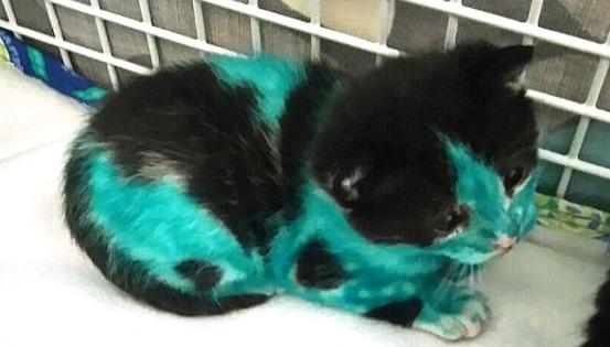 gatitos pintados 10 p