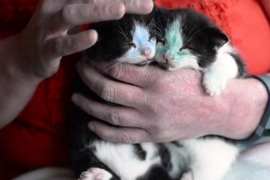 gatitos pintados 13