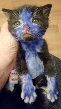 gatitos pintados 5 pp