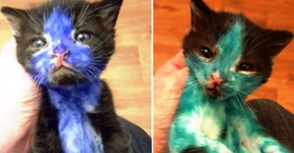gatitos pintados portada 2 p