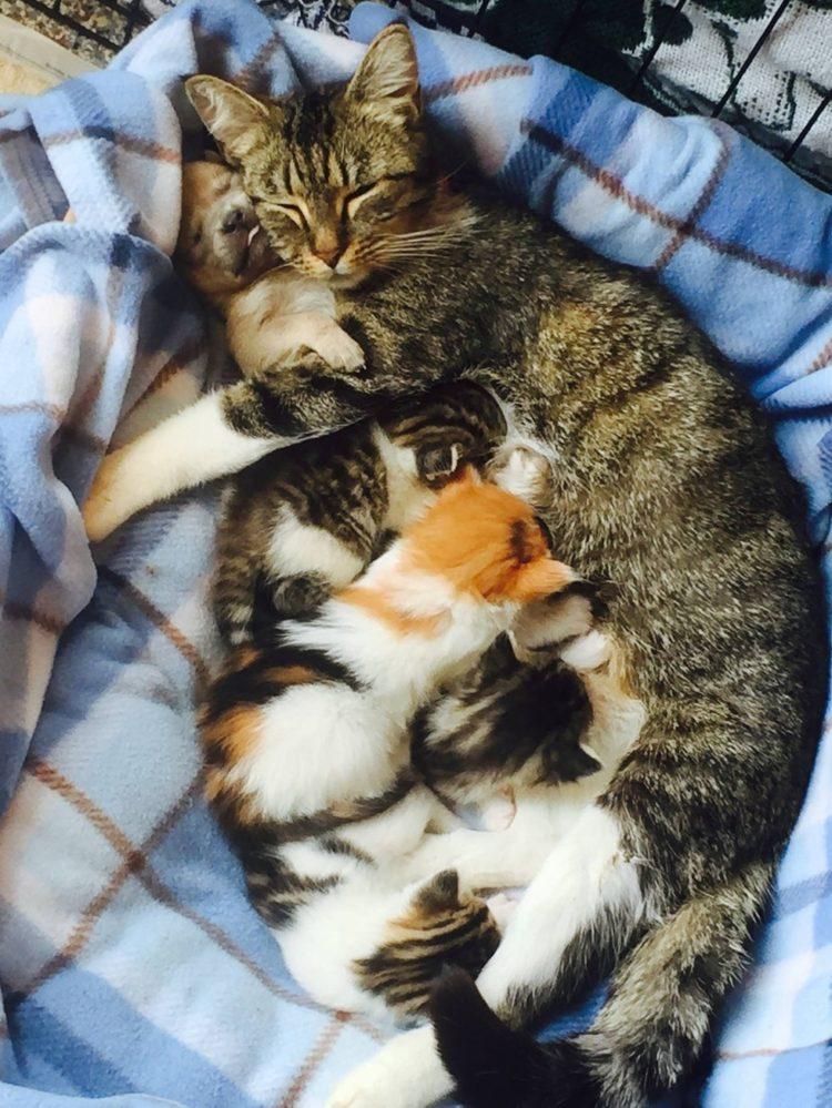 gato adopta perrito 2