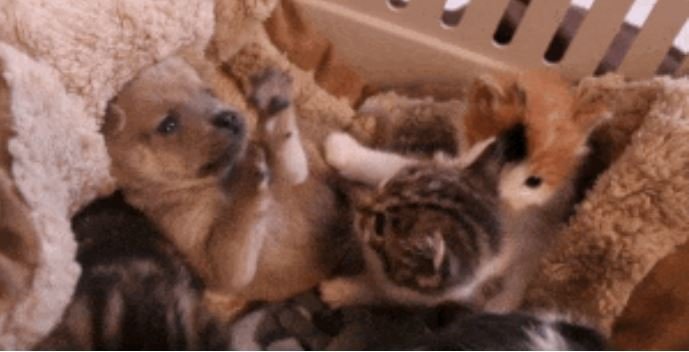 gato adopta perrito 3