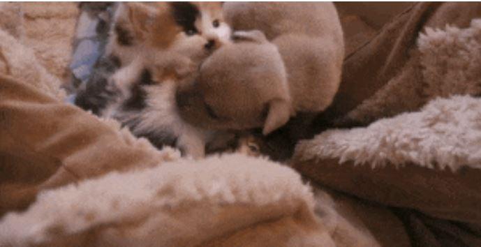 gato adopta perrito 4