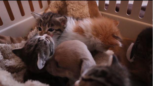 gato adopta perrito 5