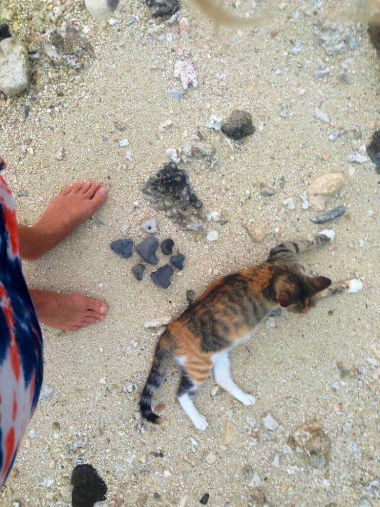 gato amelia navega por el mundo 1