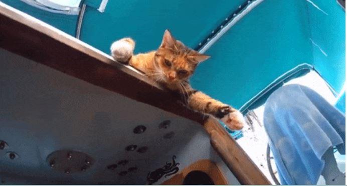 gato amelia navega por el mundo 11