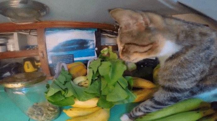 gato amelia navega por el mundo 12