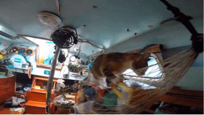 gato amelia navega por el mundo 13