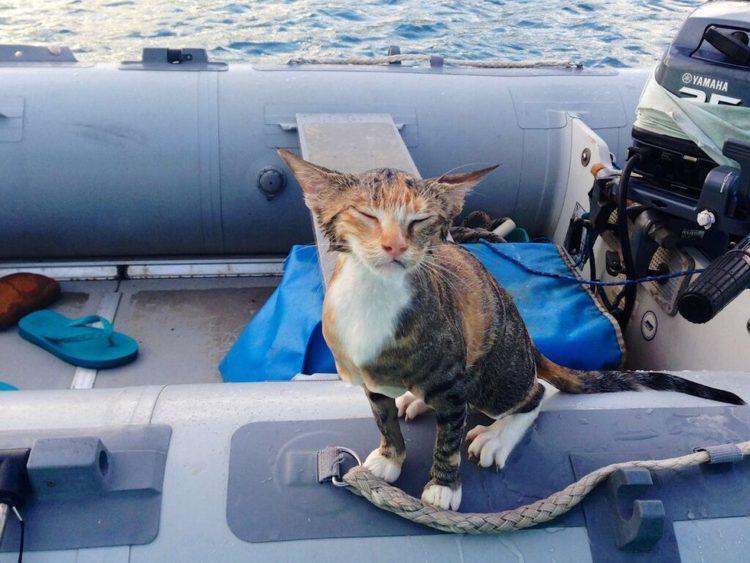 gato amelia navega por el mundo 2