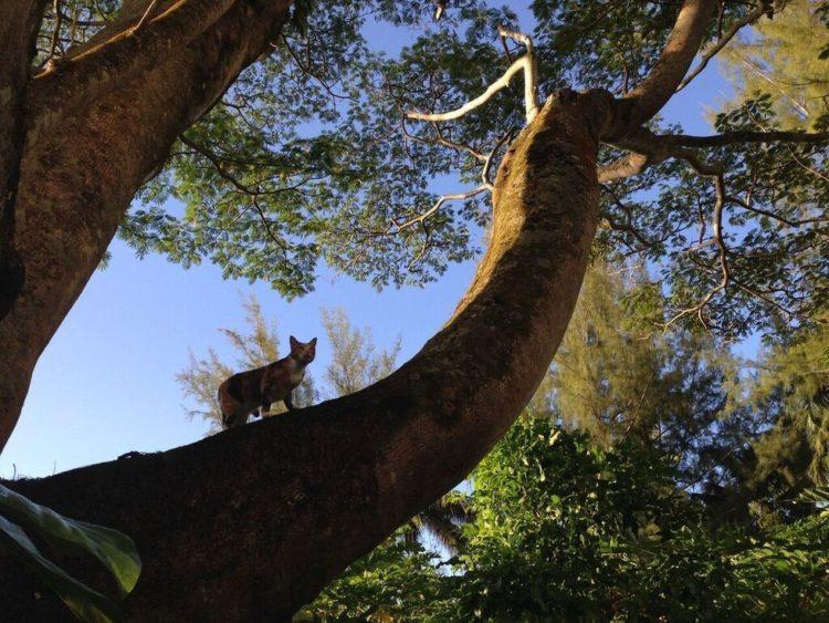 gato amelia navega por el mundo 3