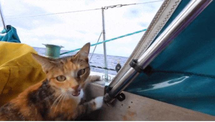 gato amelia navega por el mundo 4