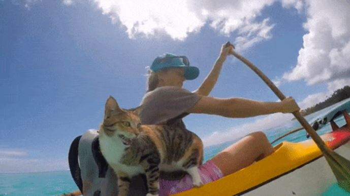 gato amelia navega por el mundo 5
