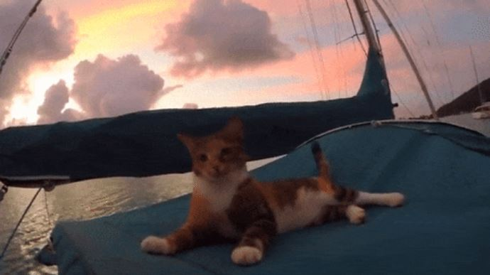 gato amelia navega por el mundo 6