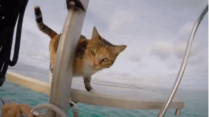 gato amelia navega por el mundo 7