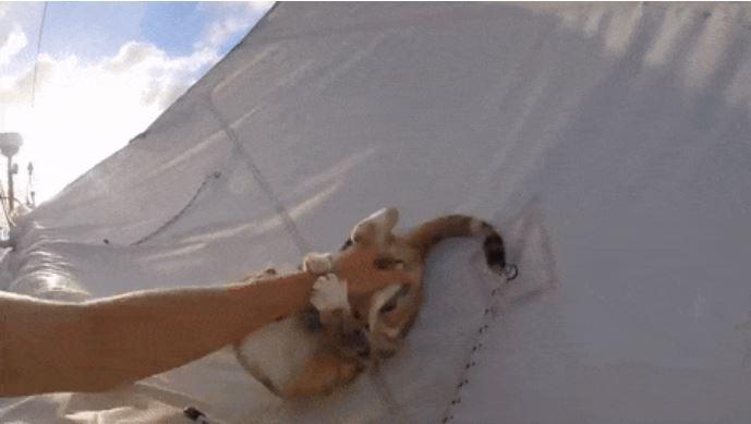 gato amelia navega por el mundo 8