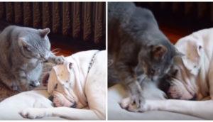 gato-perro-amor