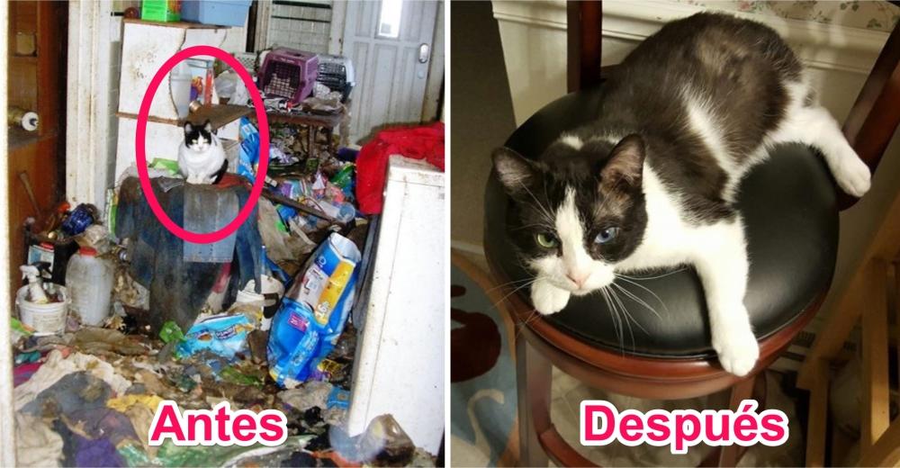 gato-rescatado-casa-acumuladores