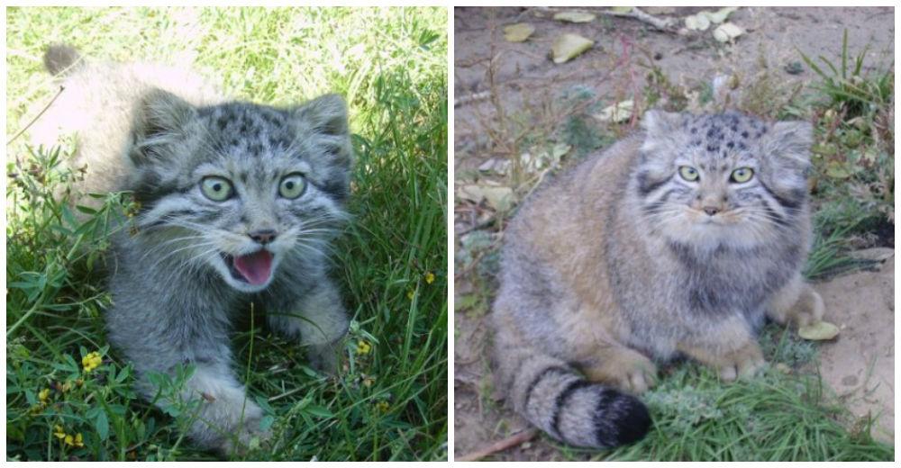 gatos-huerfanos-salvajes