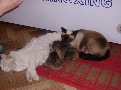 gatos-salvajes-huerfanos4