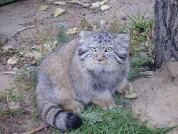 gatos-salvajes-huerfanos5