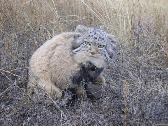 gatos-salvajes-huerfanos6
