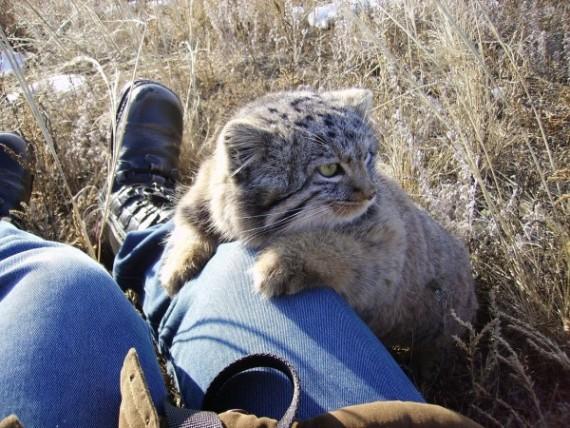 gatos-salvajes-huerfanos7