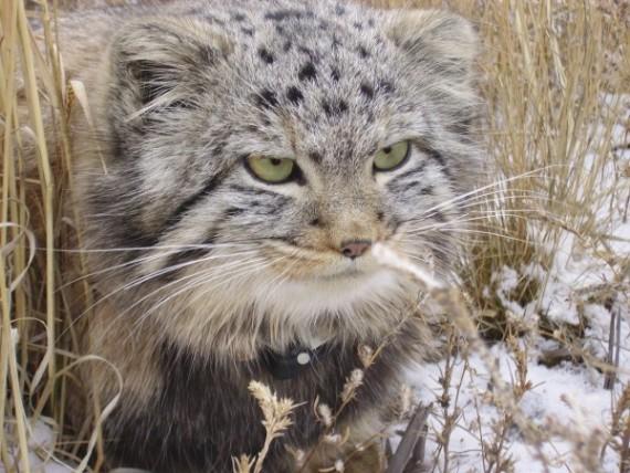 gatos-salvajes-huerfanos8