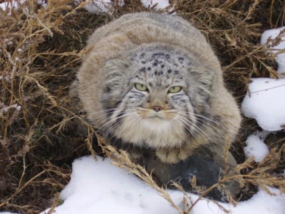 gatos-salvajes-huerfanos9