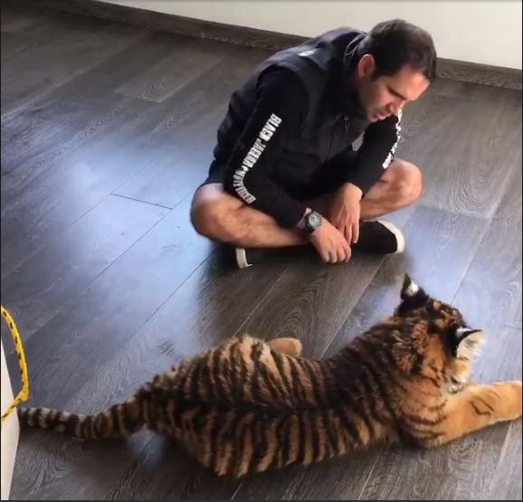jaguar-bebe-rescatado5