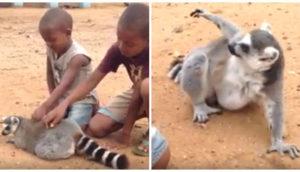 lemur-chicos-risa