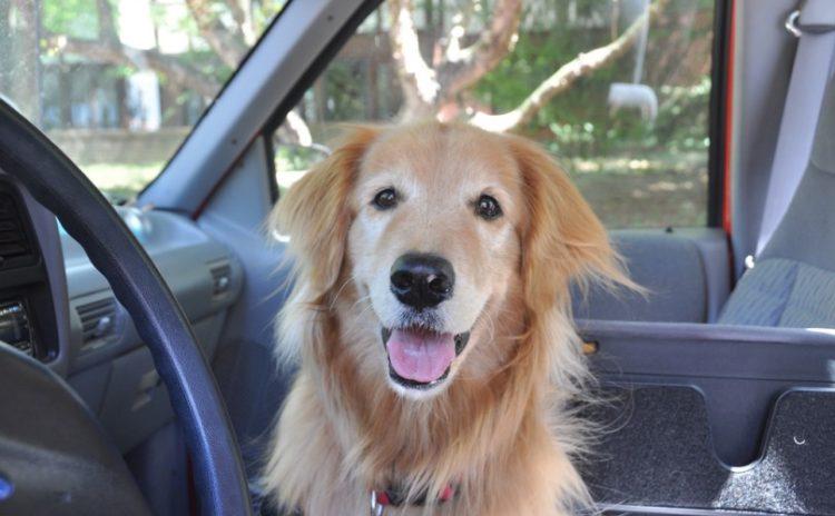 ley-de-perros-en-los-carros-florida1