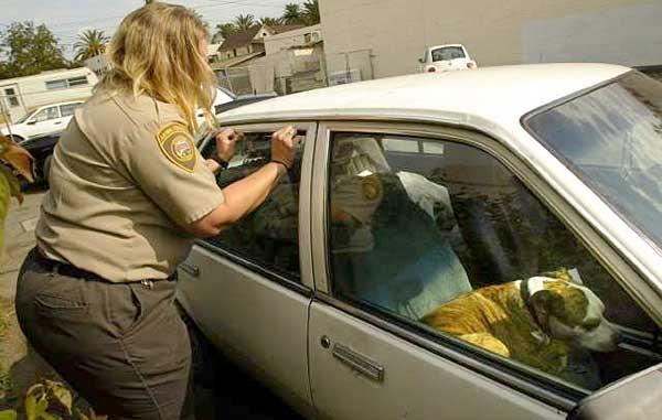 ley-de-perros-en-los-carros-florida2