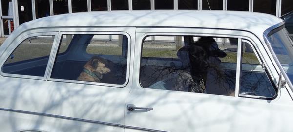 ley-de-perros-en-los-carros-florida3