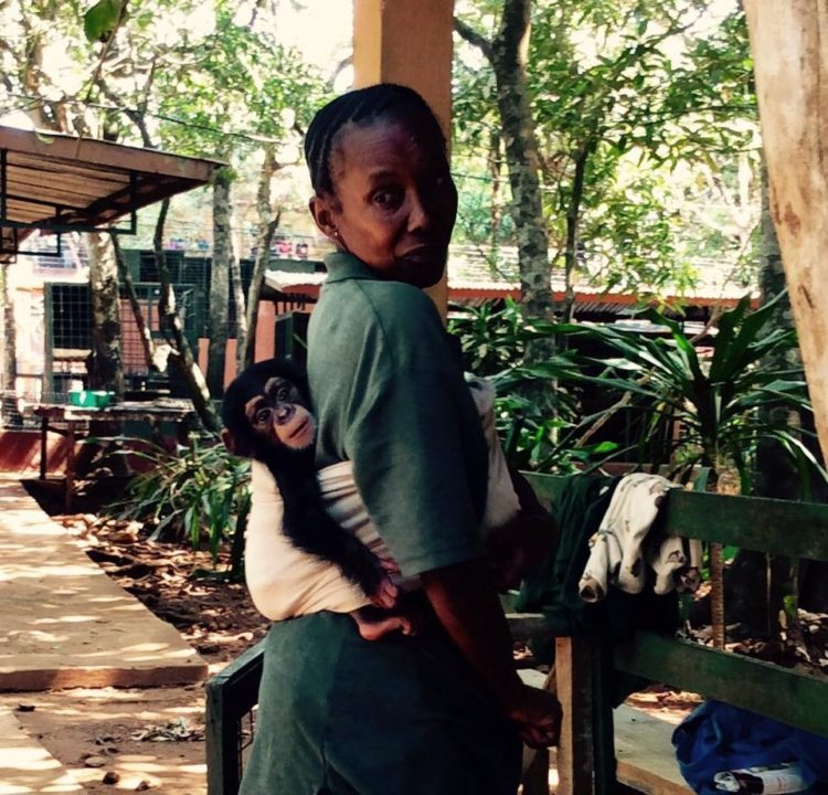 madre-adoptiva-chimpances1