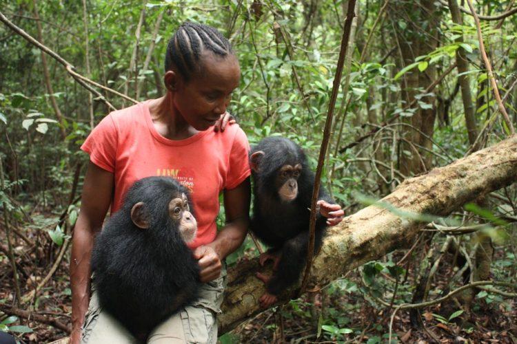 madre-adoptiva-chimpances2