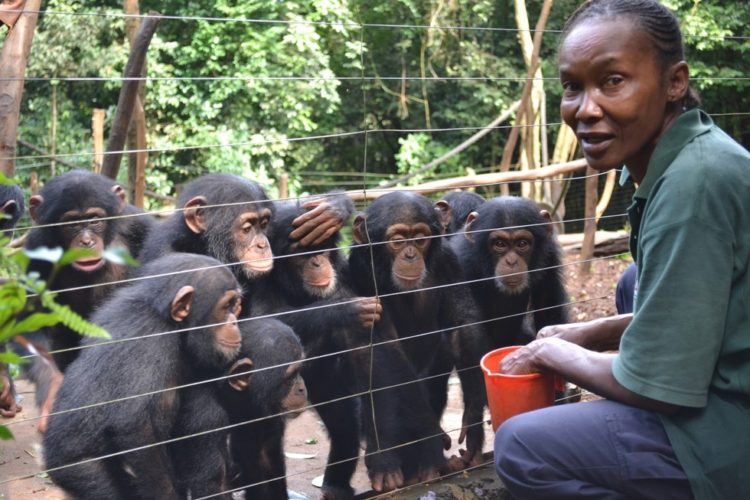 madre-adoptiva-chimpances3