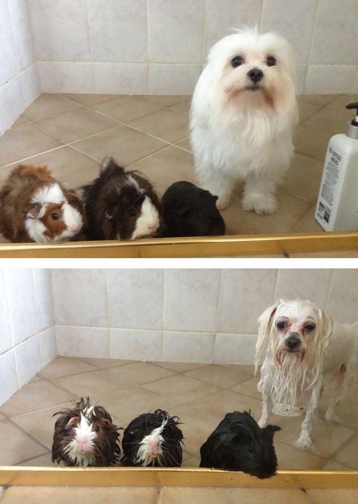 mascotas-mojadas3