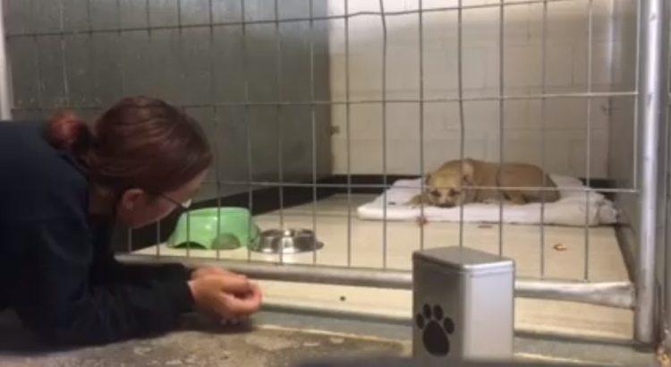 niño conquista confianza pitbull rescatada 1