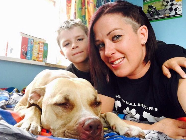 niño conquista confianza pitbull rescatada 7