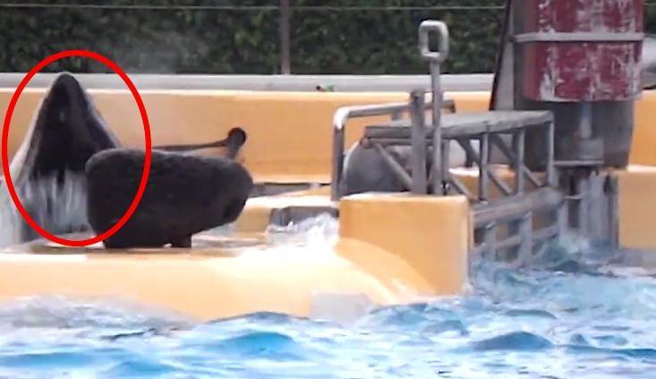 orca-tenerife-golpeandose1