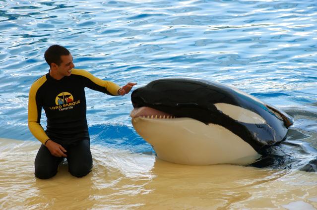 orca-tenerife-golpeandose4