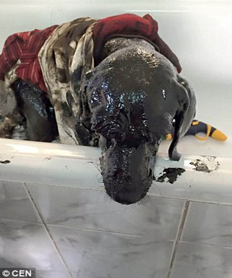 padre e hijo rescatan perro chile 3