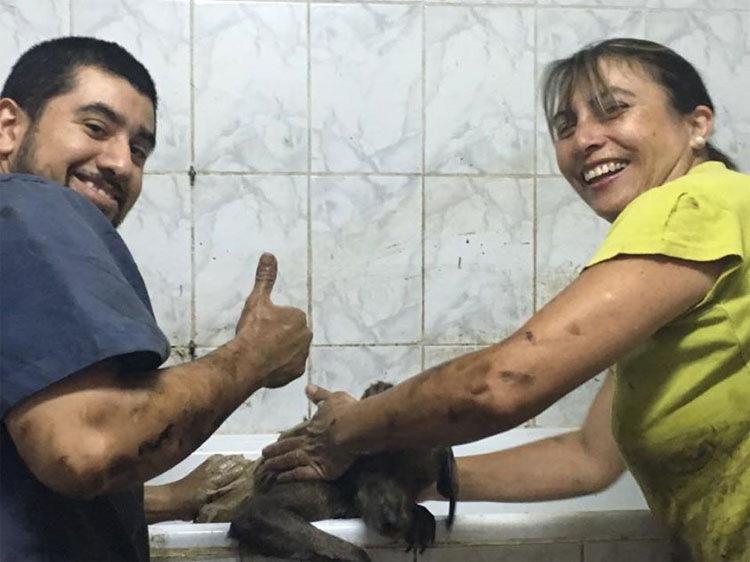 padre e hijo rescatan perro chile 7