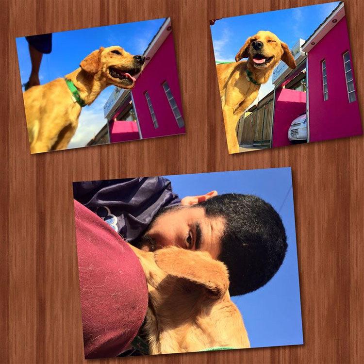 padre e hijo rescatan perro chile 8