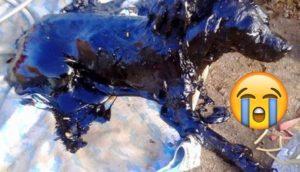 padre e hijo rescatan perro chile 9