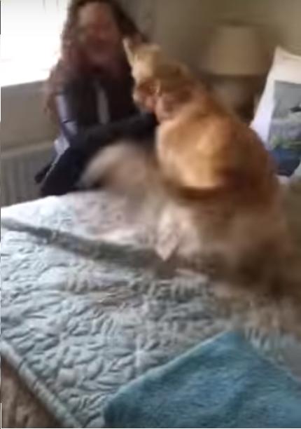 perrita recorre la casa buscando a su dueña cama