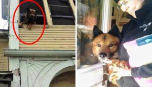 perro-atrapado-portico
