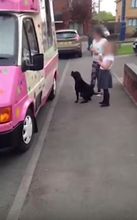 perro-corre-helado3